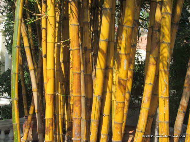 May we feel the incredible strength of the bamboo in all what we do...